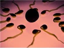 STJ proíbe implantação de embriões após morte de um dos cônjuges