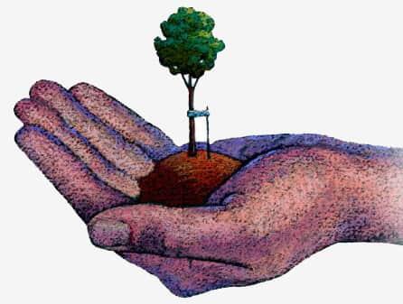 As árvores caem: O Estado responde?
