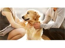 Casal separado deve compartilhar guarda de cachorro