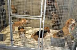 Crimes contra cães e gatos