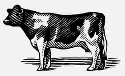 Das Vacas