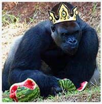 O último rei