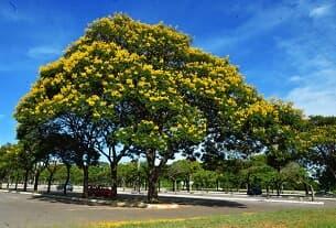 A mudança climática conduz à mortalidade das árvores
