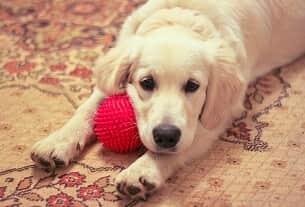 É crime agredir ou matar um cachorro?