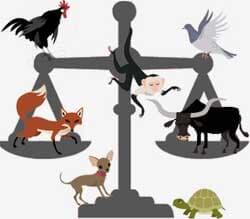 Os animais e o Judiciário