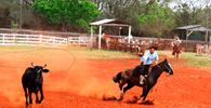 Portaria regulamenta boas práticas nos esportes equestres