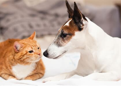 Bolsonaro vai sancionar lei que aumenta pena de quem maltratar cães e gatos
