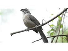 Soltura de pássaros marca dia nacional das reservas particulares do patrimônio natural