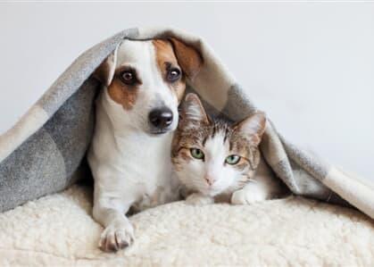 "Advogada comenta lei que aumenta pena por maus-tratos a animais: ""veio para responder aos anseios da sociedade"""