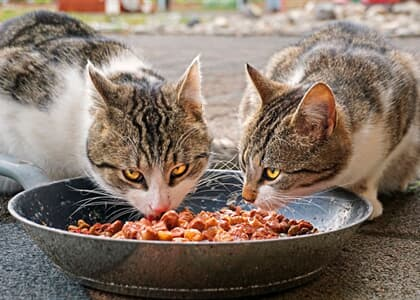 Mulher que jogou comida em telhado de vizinho para alimentar gatos deverá indenizá-lo