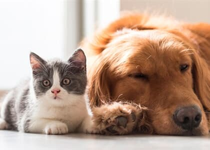 Aumento da pena para quem maltratar cães e gatos segue para sanção