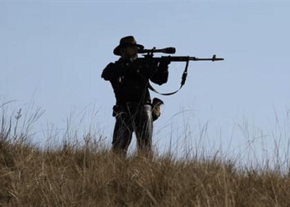 STF libera caça de animais nocivos mediante licença e para fins científicos em SP
