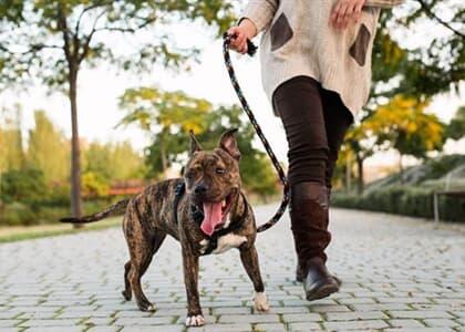 Condomínio não pode multar moradora por transportar cachorro na coleira em áreas comuns