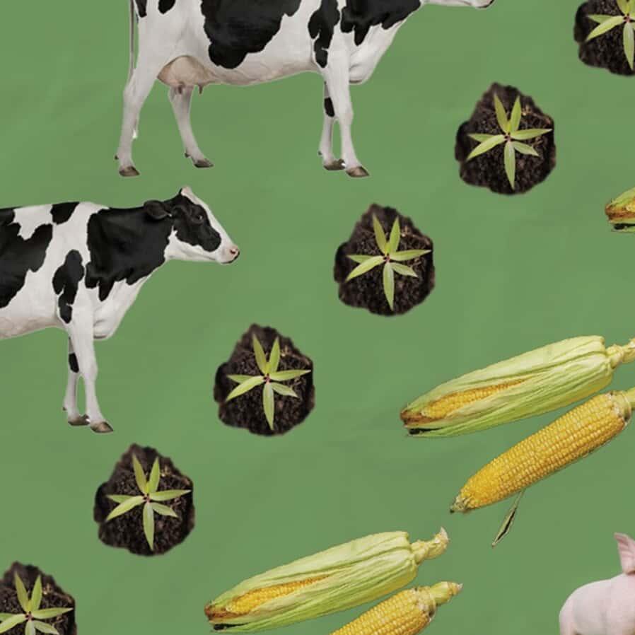 Agronegócio: Operações de exportação de carne