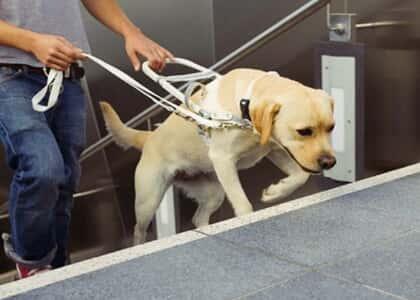O portador de deficiência visual e o cão-guia